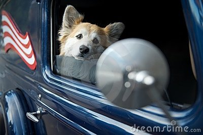 Dog in car with US flag and mirror