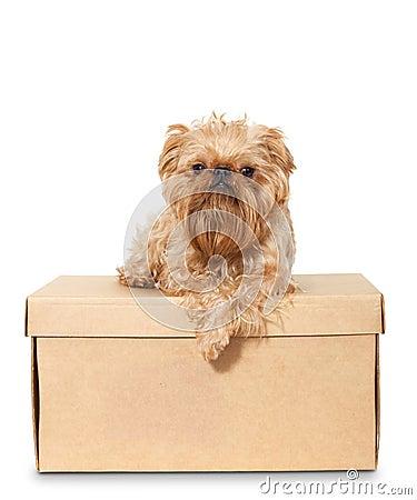 Dog on Cardboard Box