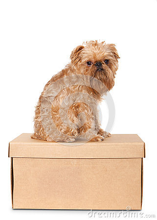 Dog on Cardboard Box