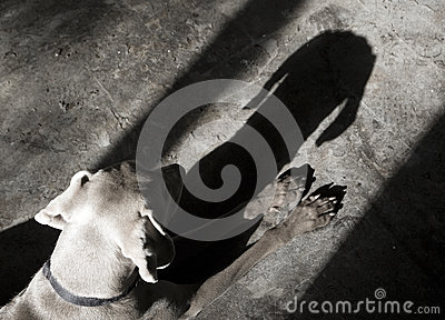 Dog casting a shadow