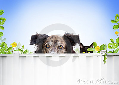 Dog And Cat Royalty Free Stock Photo - Image: 15513245