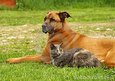Dog with cat