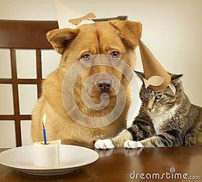 Dog and cat celebrating Birthday