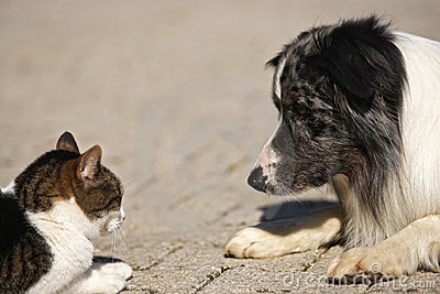 Dog and cat, head to head
