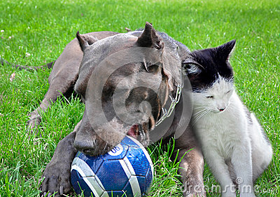 A dog and cat play a ball