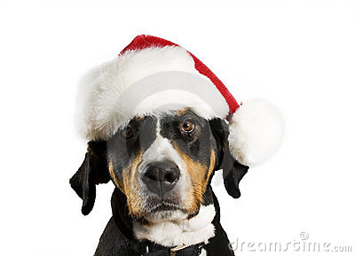 Dog with Christmas hat