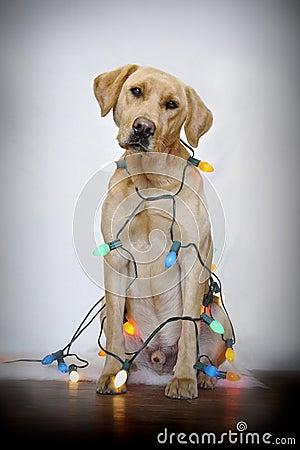Dog and Christmas lights