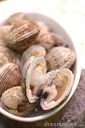 Dog cockle shellfish