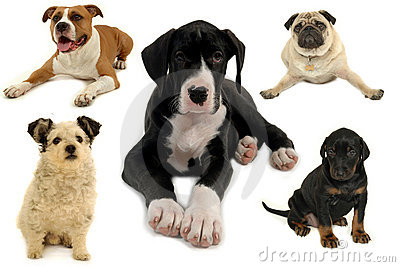 Dog collection on white background