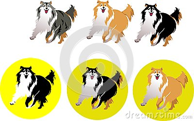 Dog Collie