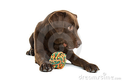 Dog with colorful ball