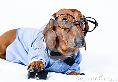 Dog with computer mouse