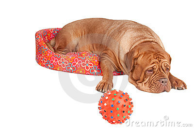 Dog in a cot