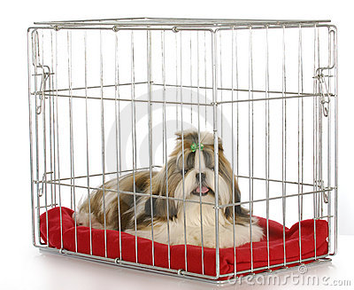 Dog in a crate