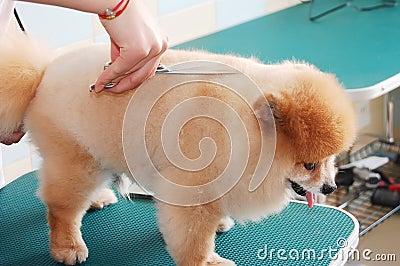 Dog cut