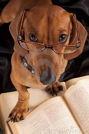 Dog  Dachshund in glasses and book