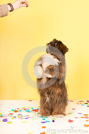 Dog dancing for food