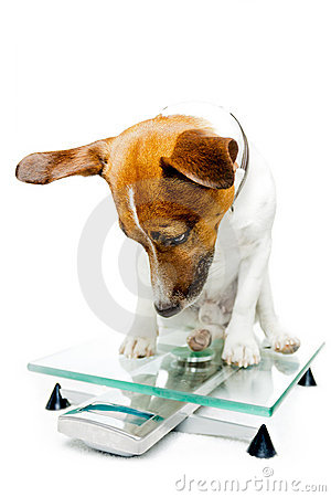 Dog on digital scale