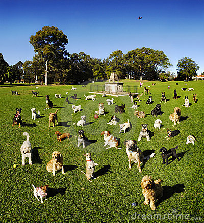 Free Dog Dogs At Park Royalty Free Stock Photos - 3669618