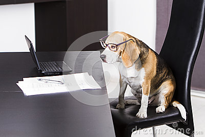 Dog-doing-the-homework