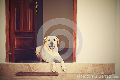 Dog in the door stock photo image 33986850 for Dog house for labrador retriever