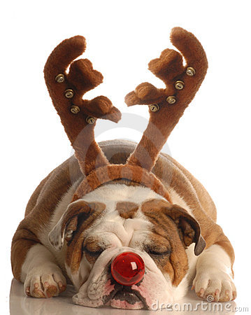Free Dog Dressed As Rudolph Stock Images - 6944584