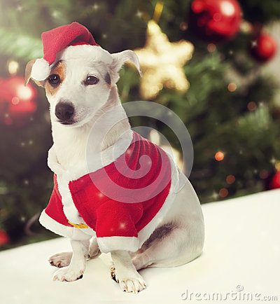 Free Dog Dressed As Santa Claus In Christmas Theme Stock Photography - 63204292