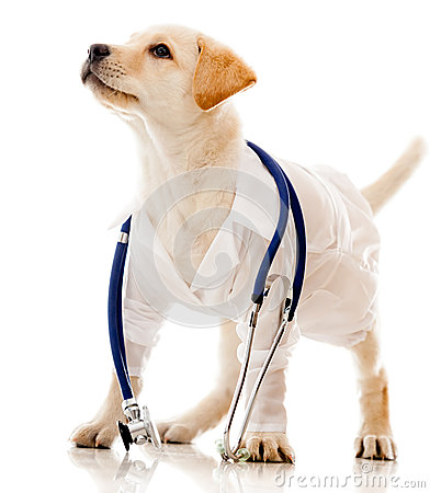 Dog dressed as a vet