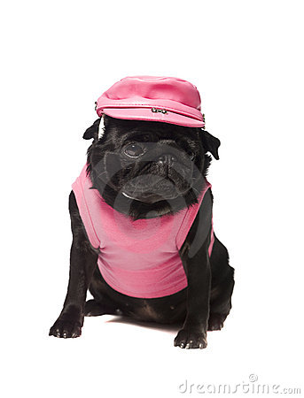Dog dressed in pink