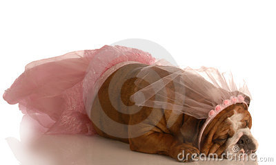 Dog dressed in a tutu