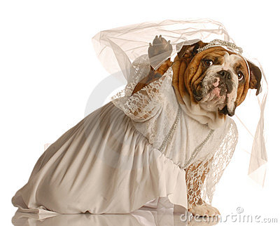 Dog dressed up as bride
