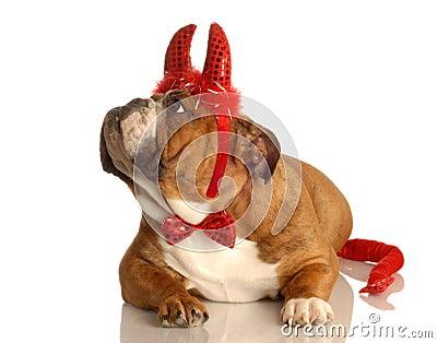 Dog dressed up as devil