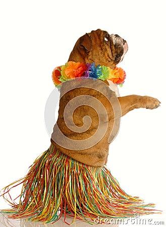Free Dog Dressed Up As Hula Dancer Stock Images - 7296144