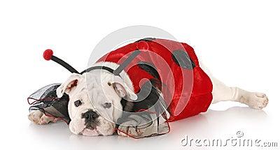 Dog dressed up like a lady bug