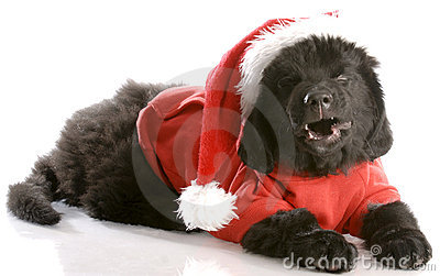 Dog dressed up like santa
