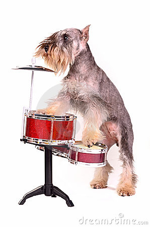 Dog with a drum kit