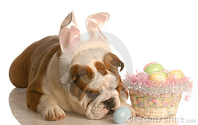 Dog with easter basket