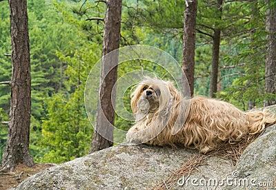 Dog on edge of cliff