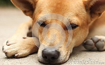Dog Emotion
