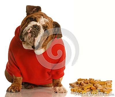 Dog enjoying dog bones