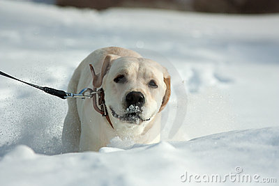 Dog Enjoying The Wintery Royalty Free Stock Photography - Image: 22302867