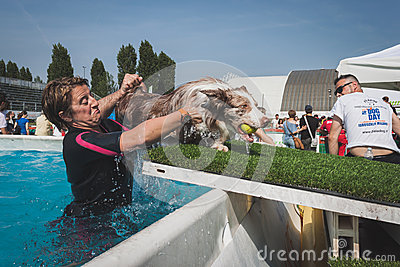 Dog enjoys the swimming pool at Quattrozampeinfiera in Milan, Italy