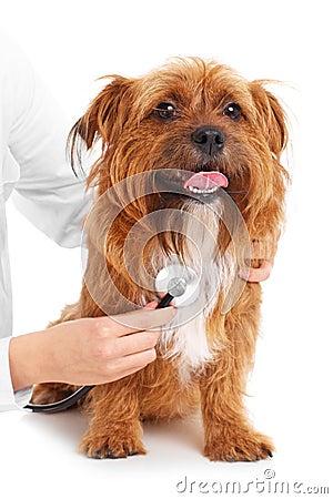 Dog examination
