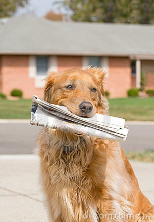 Dog Fetching the News Paper