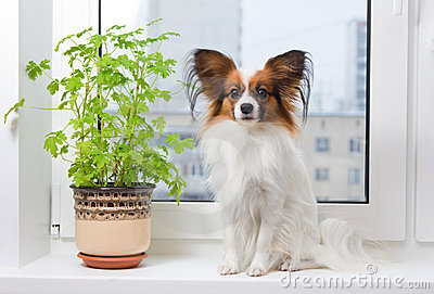 Dog and flower on window