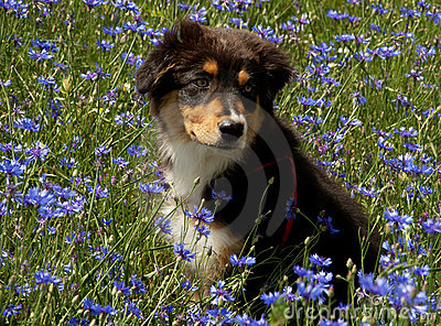 Dog in the flowers
