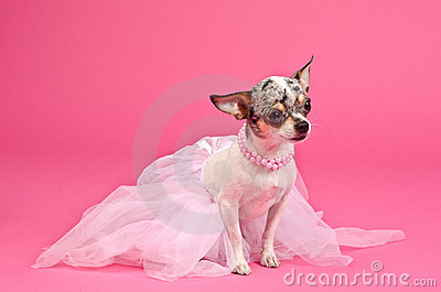 Dog with fluffy dress and pink neckwear
