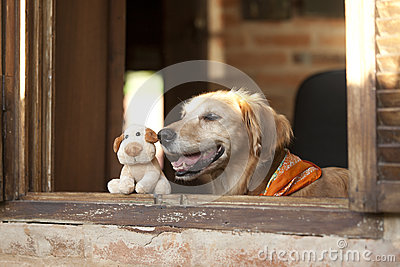 Dog and friend dog toy