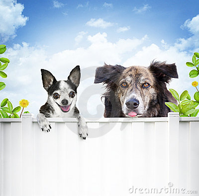 Dogs looking over fence