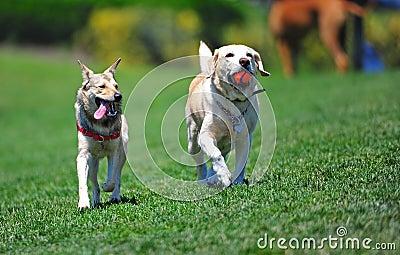 Dog Friends walking through the park